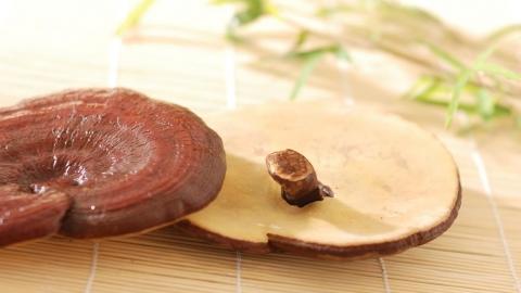 Funghi Micoterapia